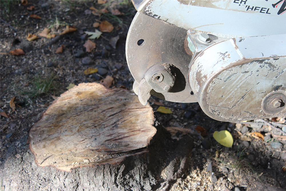 side close up view of a stump grinder tooth